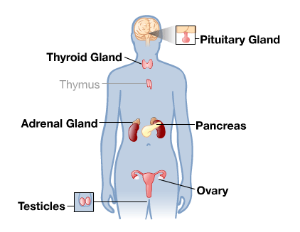 The Endocrine System is the release in hormones. Parts ...